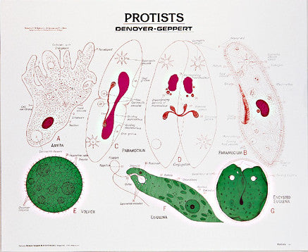 1881-01  Protists, unmounted