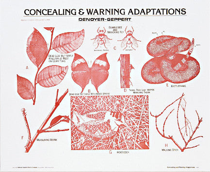 1908-10  Concealing and Warning Adaptations