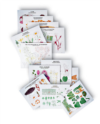 1990-41  Complete Biology Series of 35 charts with stand