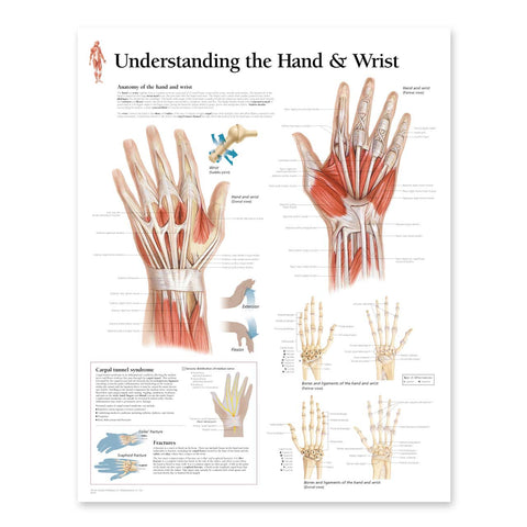 2115-08 Understanding the Hand and Wrist Anatomical Poster