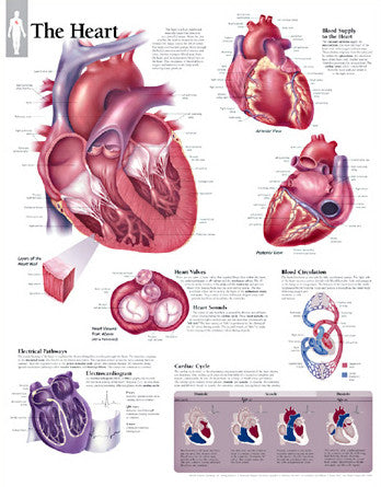 2140-08 The Heart