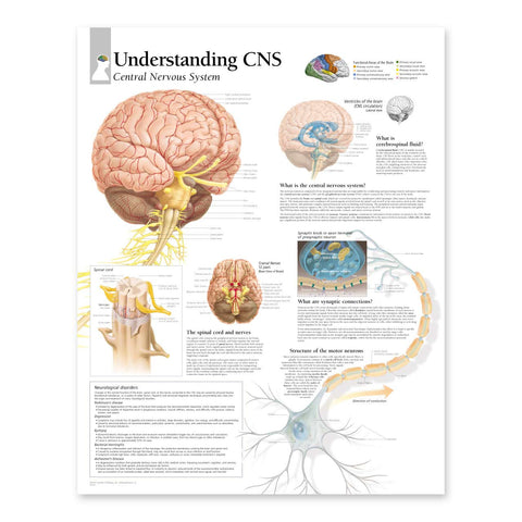 2175-08 Understanding the Central Nervous System Anatomical Poster ...