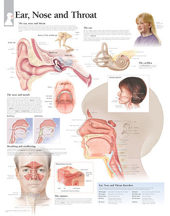 2357-08 Ear, Nose, & Throat