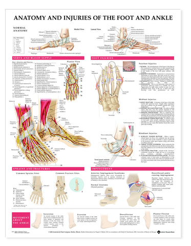 2379-08S Anatomy and Injuries of the Foot and Ankle