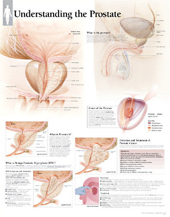 2450-08 Understanding the Prostate