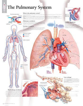 2800-08 The Pulmonary System