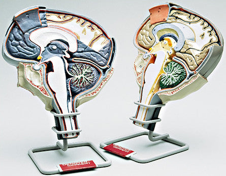 A78-9  Brain Section Set