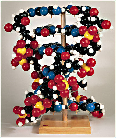 0611-00  Giant DNA Molecule