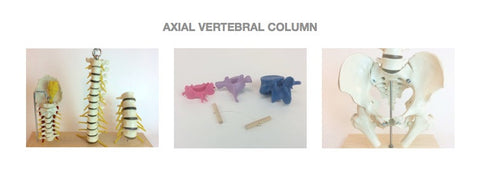 SV64 Axial Spinal Column Learning System