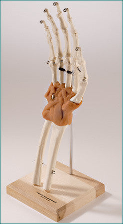 SJ66M  UltraFlex™ Ligamented Hand and Wrist Reproduction