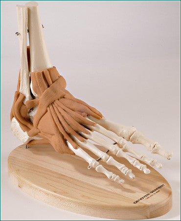 SJ66P UltraFlex Ligamented Foot and Ankle Reproduction