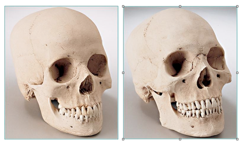 SK222 Hydrostone Male and Female Skull Replicas Set