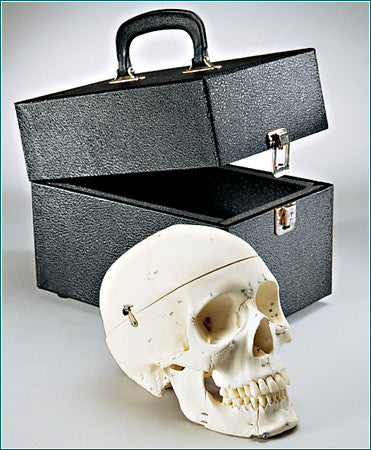 SK82C Premier Numbered Medical Demonstration Skull with case