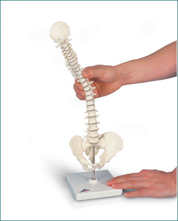 SP182  Flexible Miniature Vertebral Column