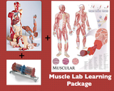T38 Muscle Learning Lab