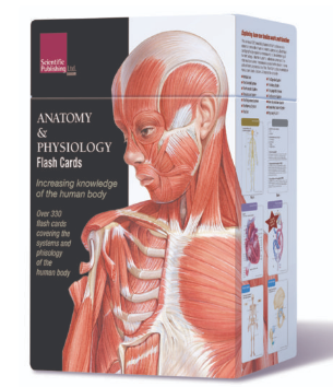 FL335 Anatomy and Physiology Flash Cards