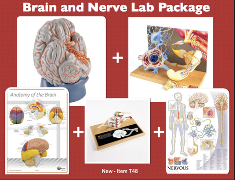 T48 Brain and Nerve Lab Package