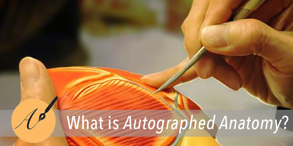 Autographed Anatomy Explained