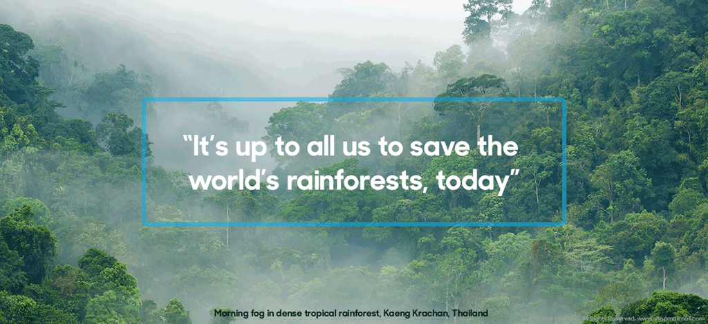 Help save our rainforests.