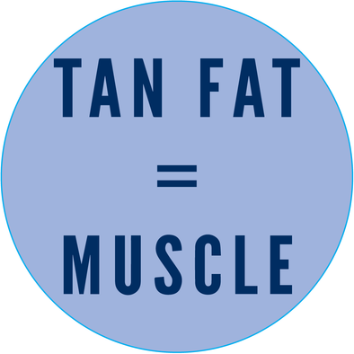 Tan Fat = Muscle - Sticker