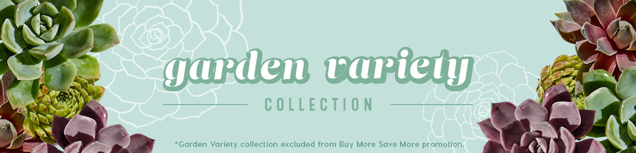 Garden Variety Collection *Excluded from Buy More Save More promotion