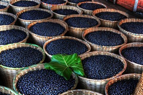5 Things You Probably Didn't Know About Açaí Berries