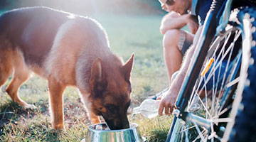 How Much Water Should a Dog Drink? And Other Hydration Tips for Your Furry Friends