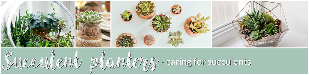 Greenovia Crafts succulent planters caring for succulents