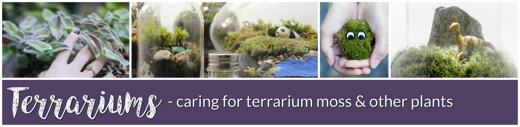 Greenovia Crafts caring for terrarium moss and other plants