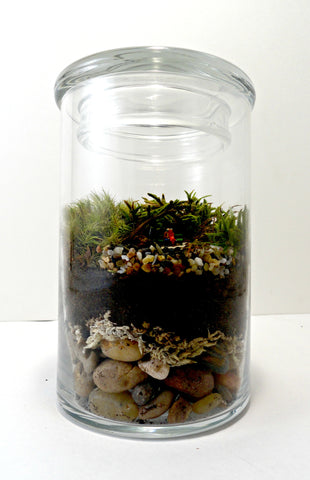 A Life of Love Terrarium