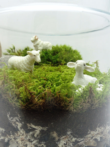 Sheep! Terrarium