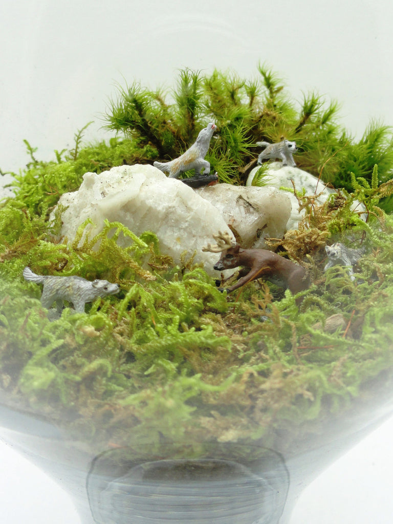 Moose Attack Terrarium