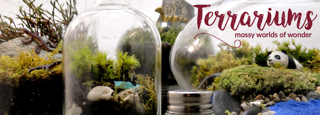 Terrariums with Moss