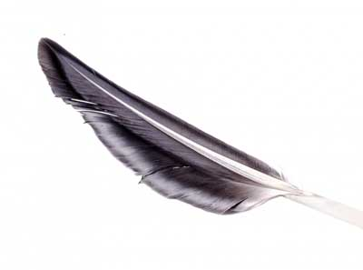 black feather meaning