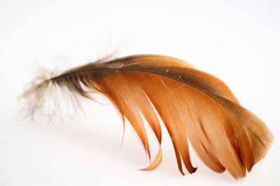 brown feather meaning