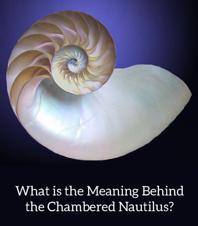 Nautilus Shell Meaning in Jewelry