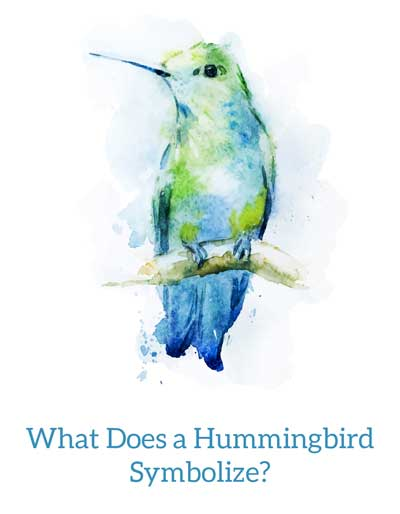 Hummingbird visits have meaning