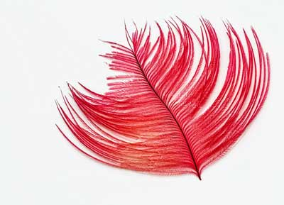 red feather meaning