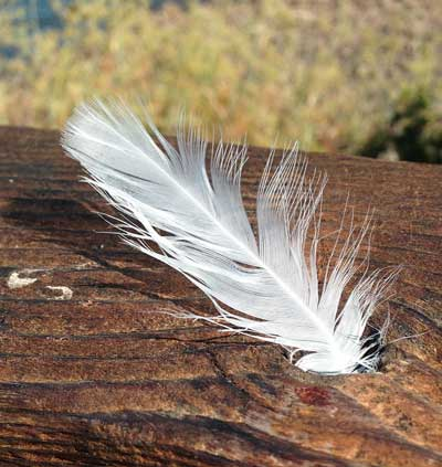white feathers and angels