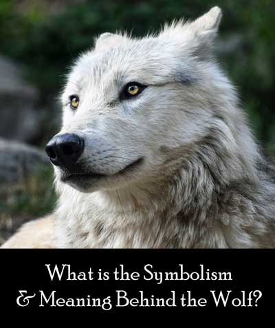 Wolf Symbolism & Meaning