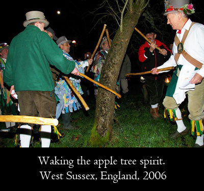 Waking the apple tree spirit by beating with sticks, wassailing, West Sussex, England, 2006
