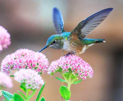 what does a hummingbird represent