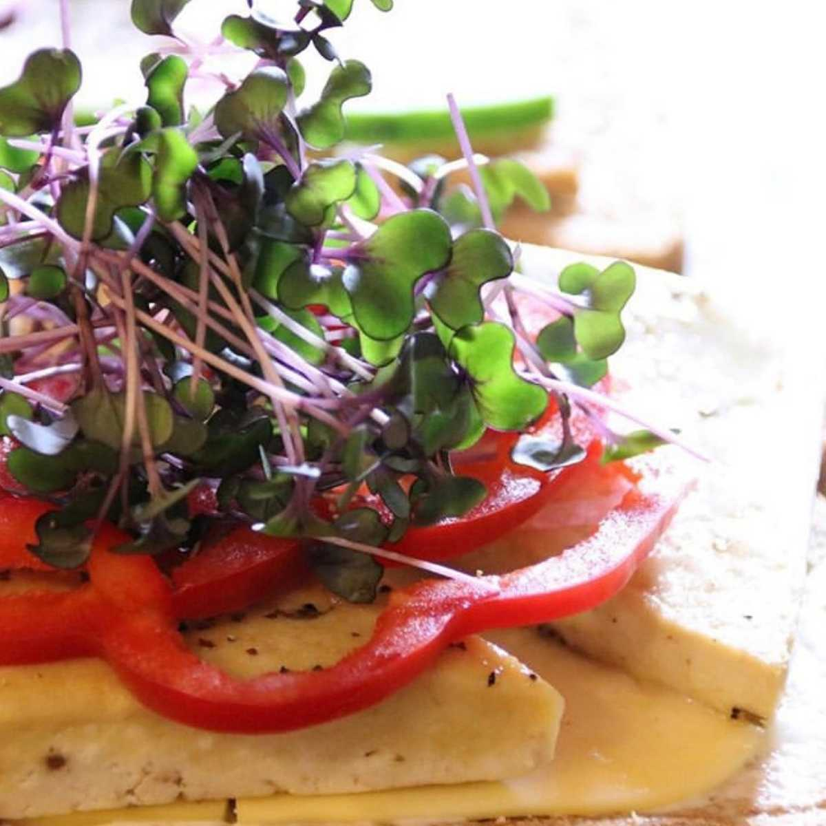 tempeh toast with microgreens