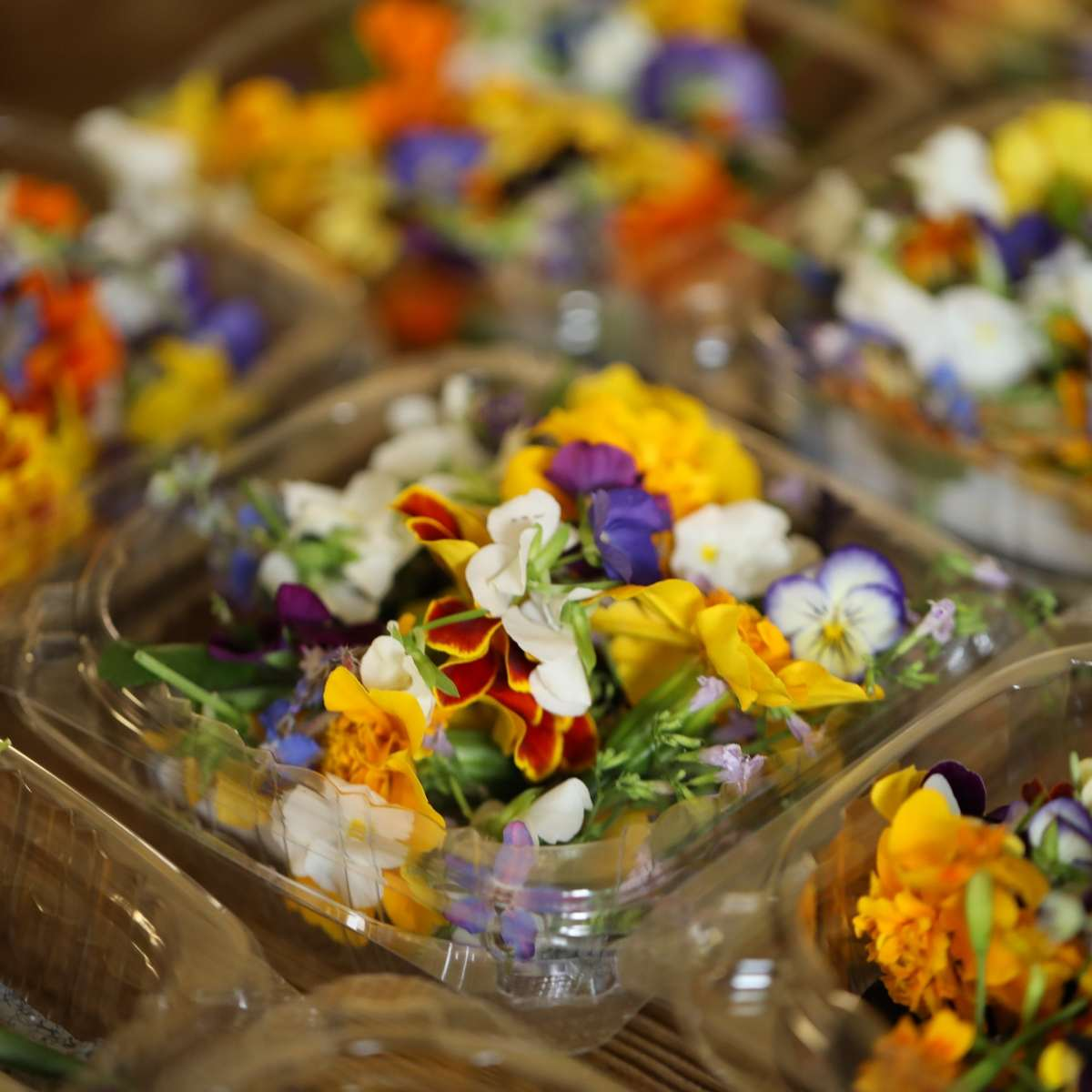 growing edible flowers for chefs