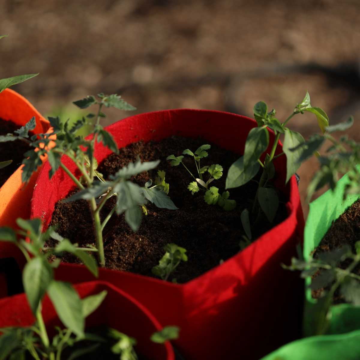 Grow Bags Advice For Growing Plants In Fabric Containers
