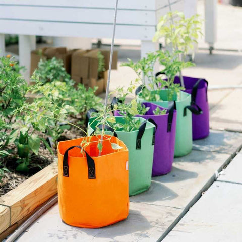 multicolor fabric grow bags
