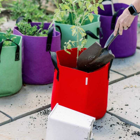 planting in grow bag