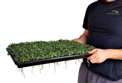 Extra Strength Microgreen Tray