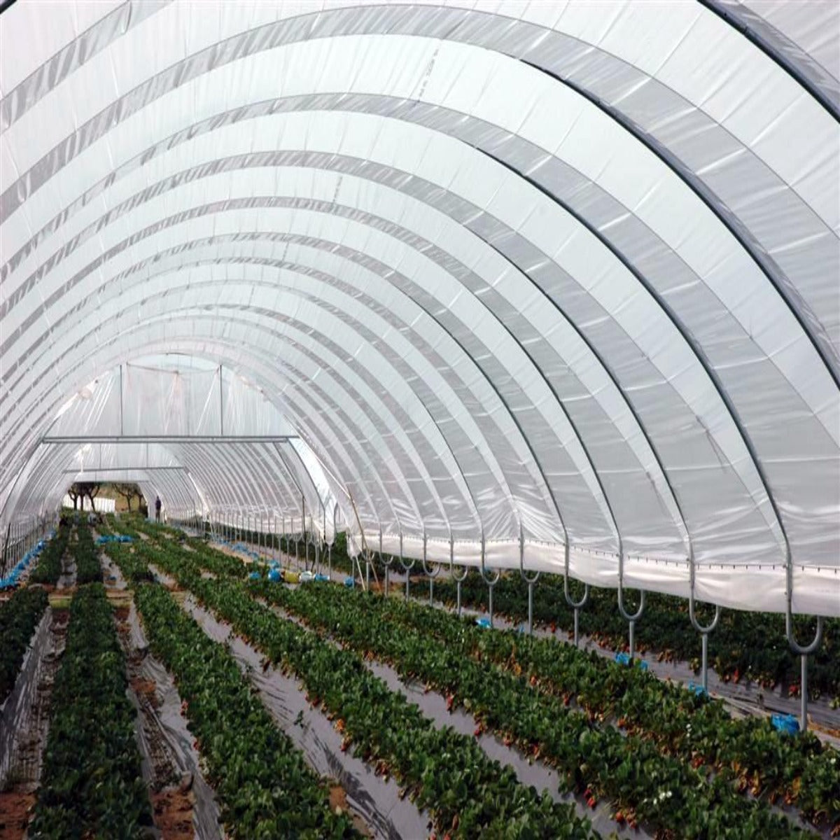 Greenhouse Woven Plastic 11 mil- Solarig 182 | Free Shipping