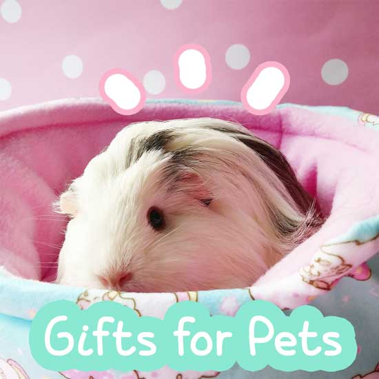 Photo of Pet Guinea Pig in Fleece Bed with Gifts for Pets Text